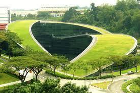 techos-verdes-3